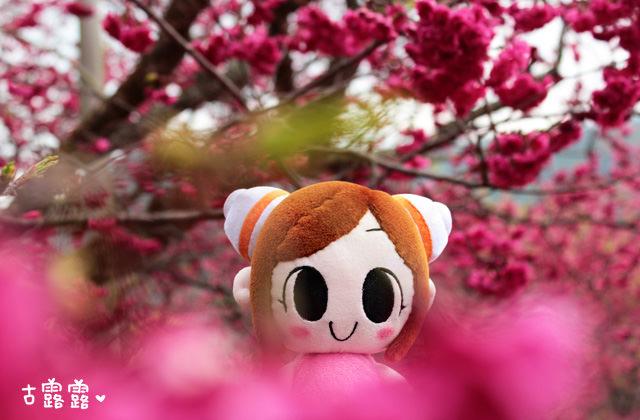 [南投景點] 九族櫻花祭 台灣最大賞櫻盛會|九族文化村 來遊樂園囉!