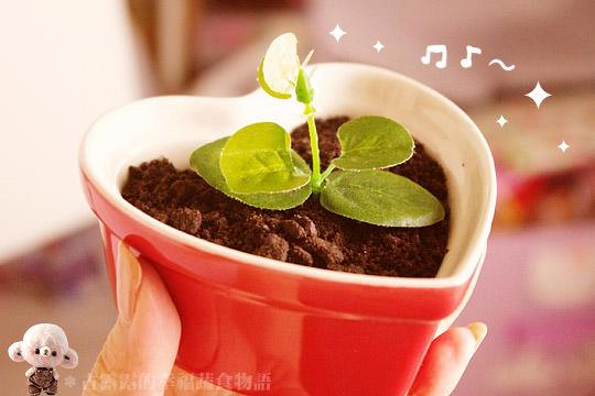 露露日常料理 ▌這盆栽真的可以吃!用榛果可可亞做出時髦點心~盆栽蛋糕