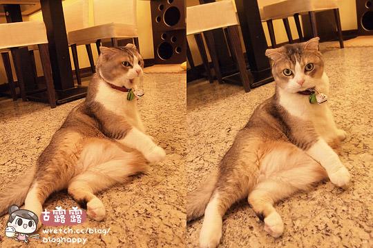 【宠物餐厅】可爱的猫咪肉球部队~被攻陷啦!三重野猫