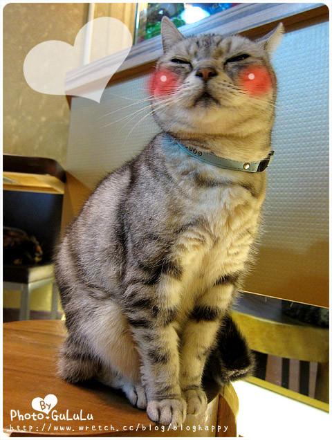 [台北] 元氣貓主題餐廳 寵物餐廳 芝山